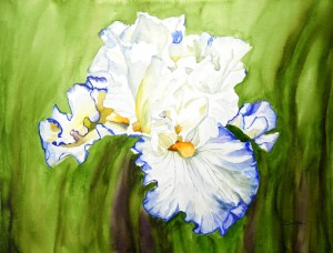 Iris-aquarelle-50x40--300x228