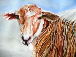 199.les-hautes-alpes-.mouton-laineux-aquarelle-50x40cm-300x225 dans Huile