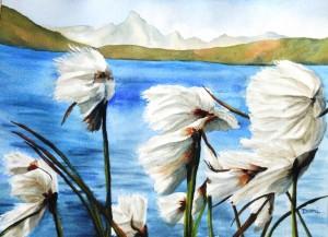 Copie de 235.Les Linaigrettes du Queyras aquarelle 40x30cm