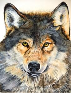 Copie de 284. Le Loup aquarelle 50x40cm