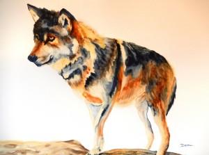 Copie de 291.Le loup solitaire aquarelle 50x40cm
